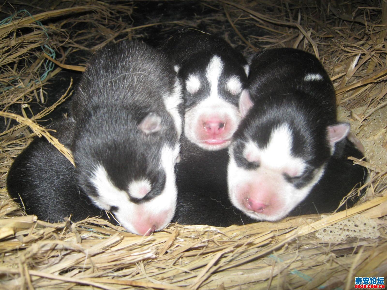 狗宝宝刚出生的时候