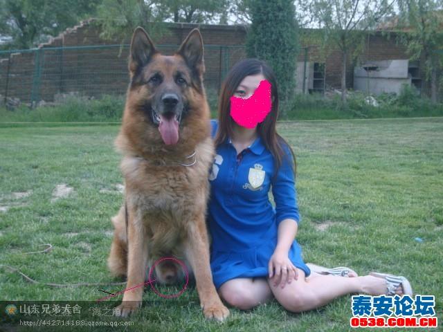 为什么女人爱养大型公犬?