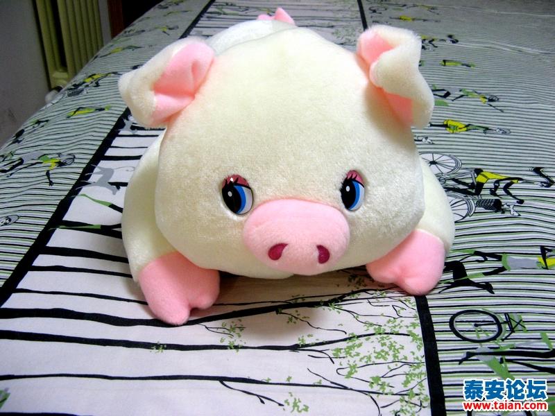 可爱的小猪(拍的图片)