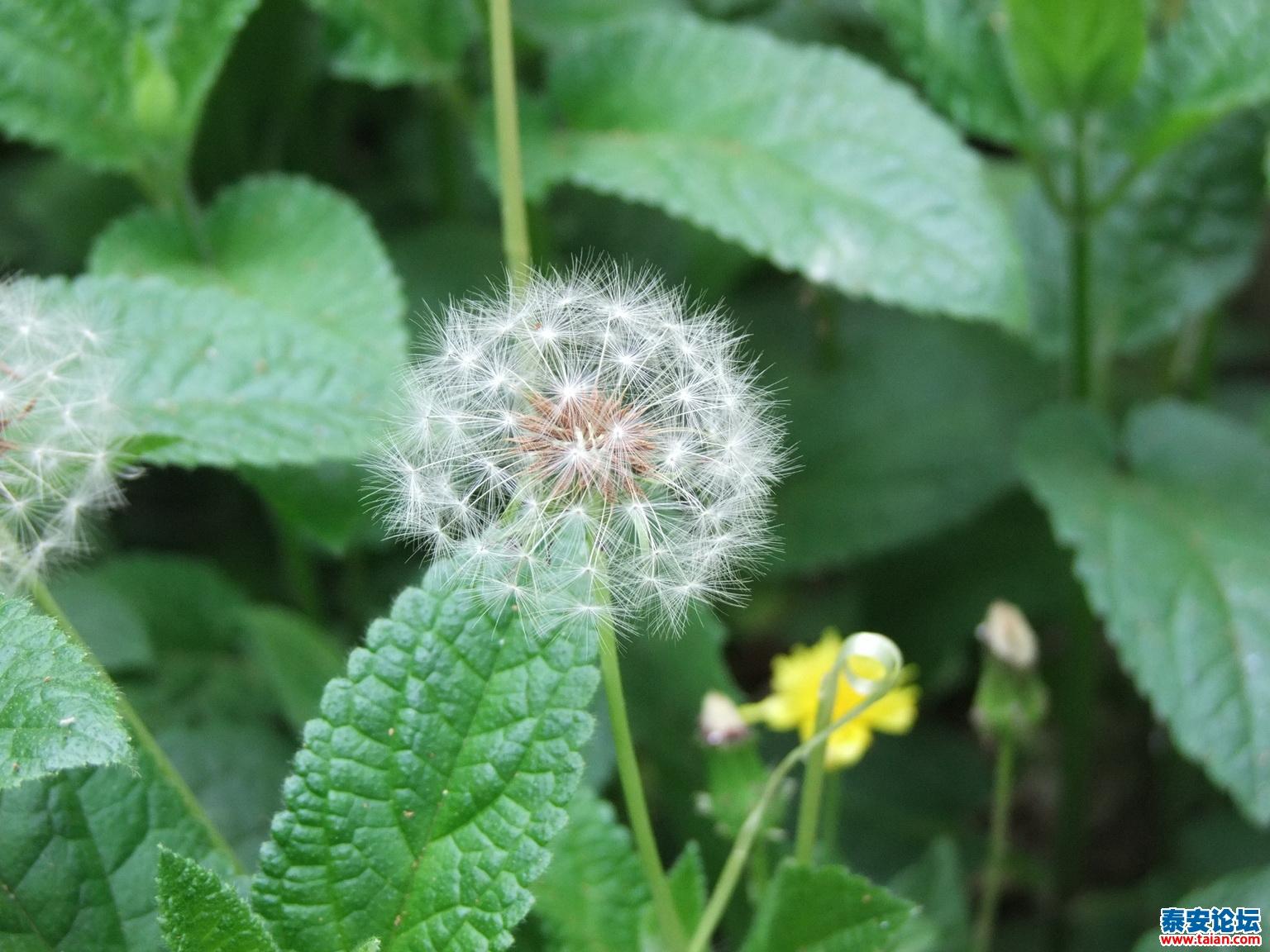回家院子里的,花蕊中有只可爱的蚂蚁
