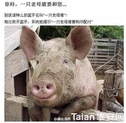 到底谁他妈的蓝牙名叫一只老母猪.图片
