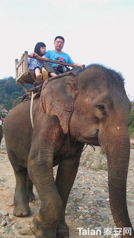 上个大象镇楼