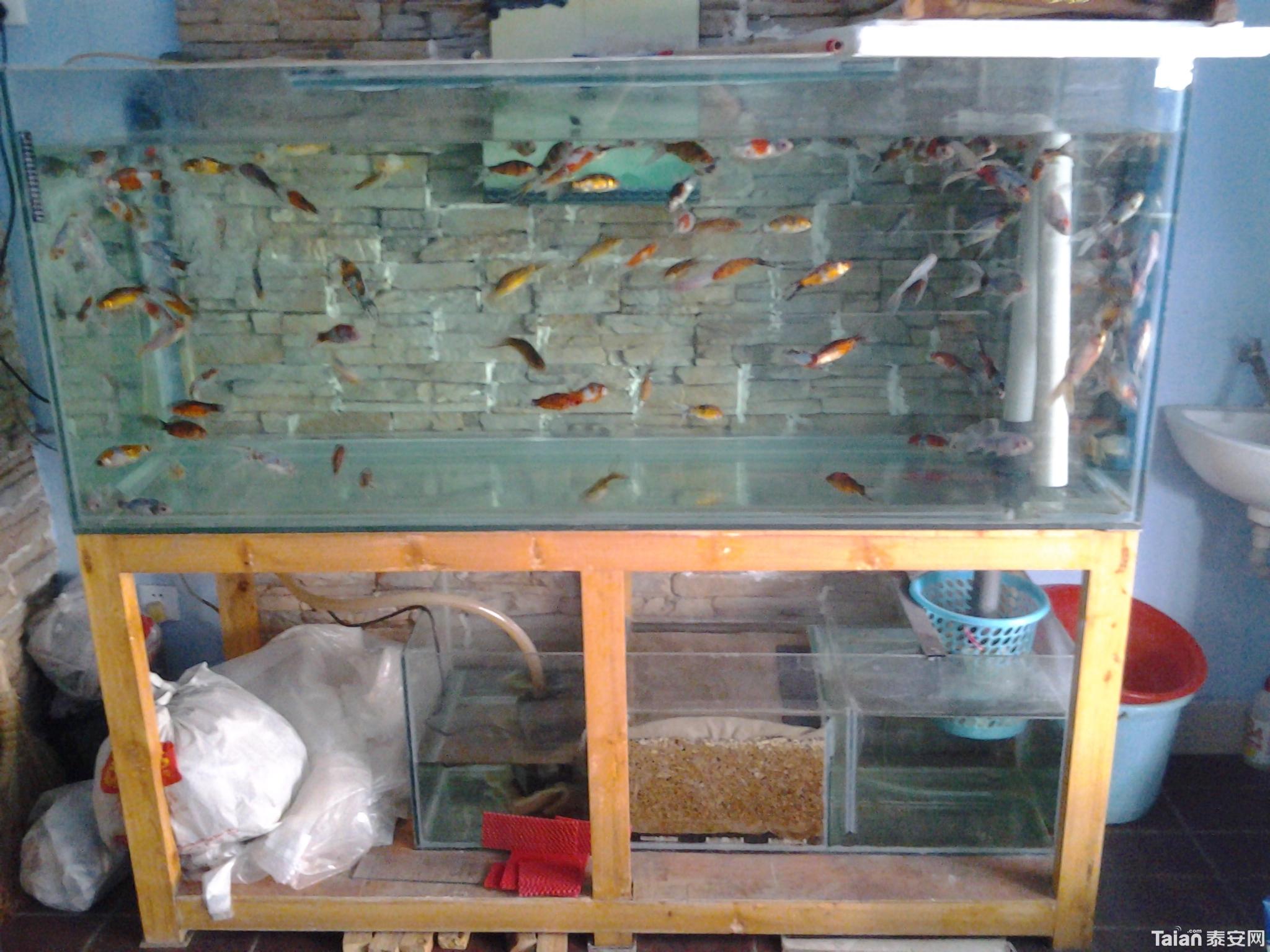 diy鱼缸设计图