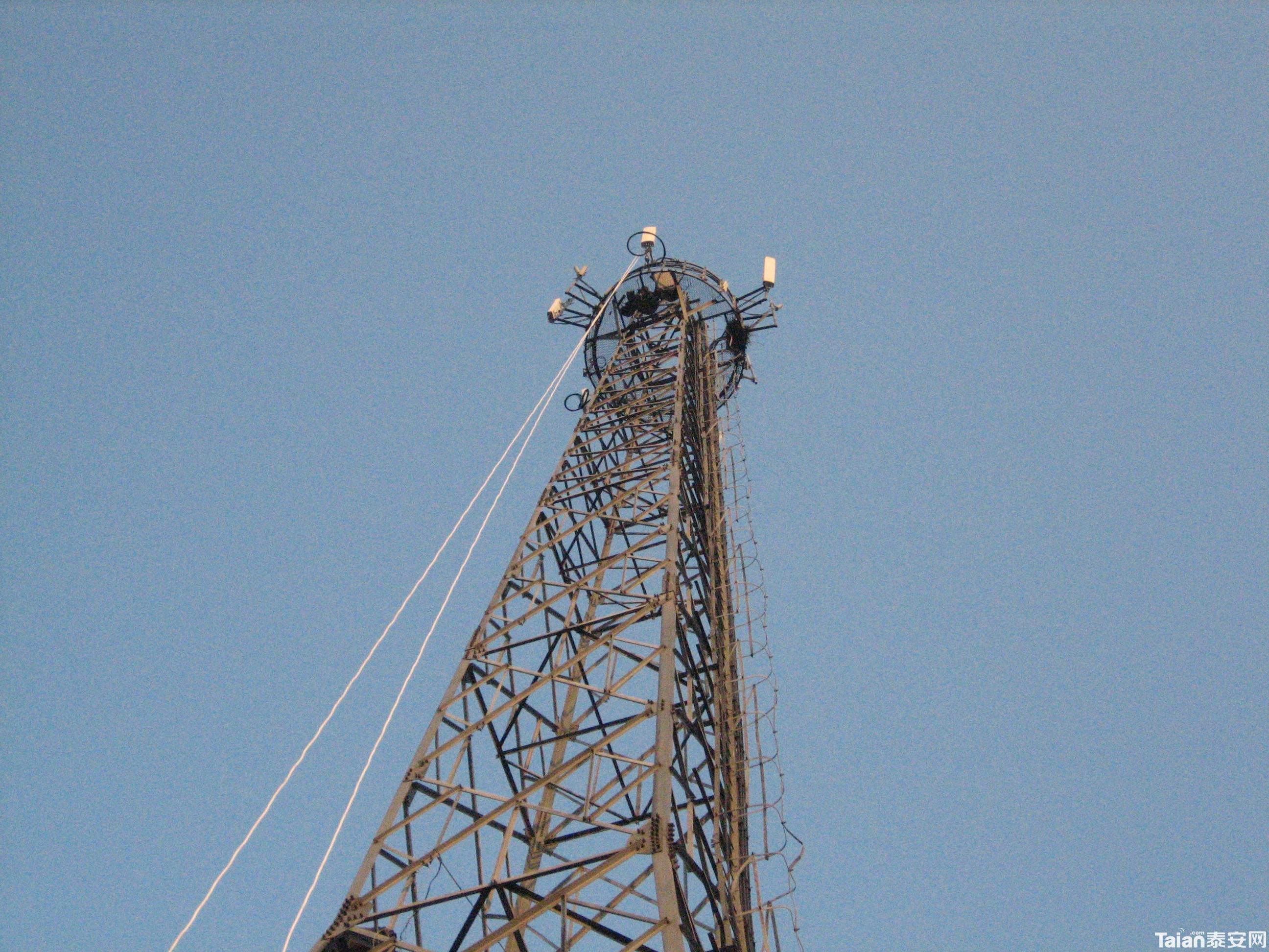 招聘能在移动信号塔安装工