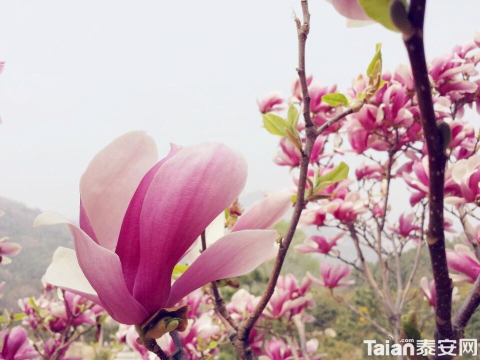 QQ图片20140329101359_副本.jpg