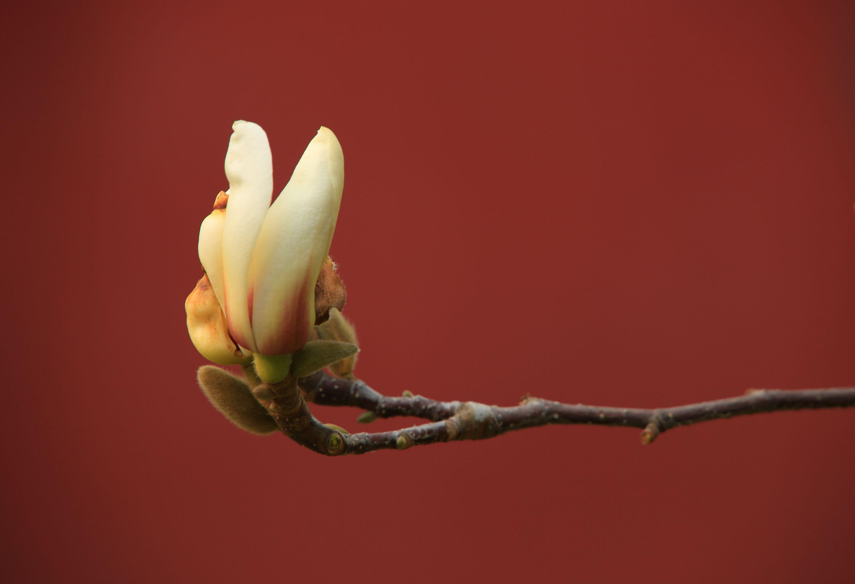 红墙的花朵