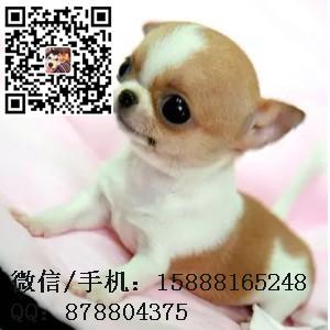 small_201608040827313074.jpg
