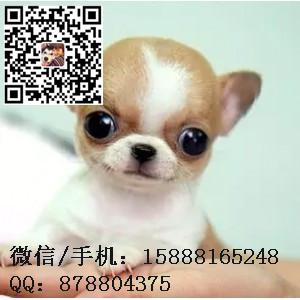 small_201608040827313377.jpg