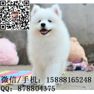 small_201604021125214710.jpg