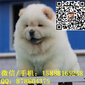 small_201701041006278139.jpg
