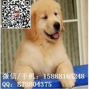 small_201608052105441104.jpg