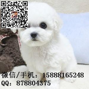 small_201608052258325360.jpg