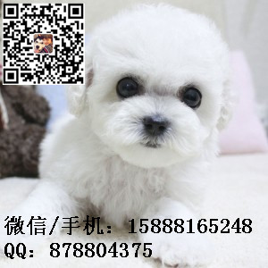 small_201608052258362798.jpg