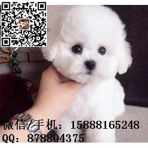 small_201702102159498032.jpg