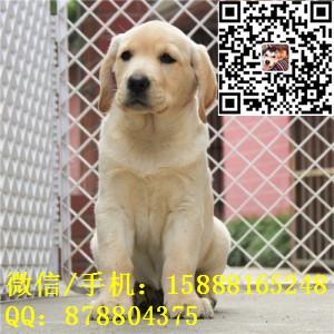 small_201608091054091827.jpg