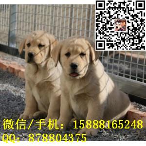 small_201612111836253399.jpg