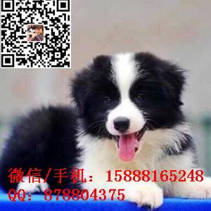 small_201610172006173889.jpg