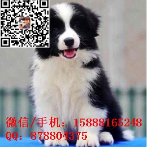 small_201610172006216805.jpg