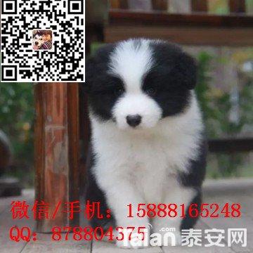 small_201703292255117432.jpg