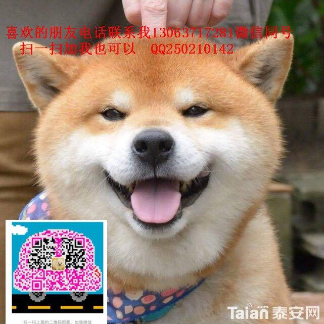 TB2WiodgS3PL1JjSZFxXXcBBVXa_!!2840146507.jpg