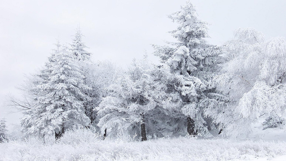 Winter-white-season-in-the-forest-HD-wallpaper_1920x1080.jpg