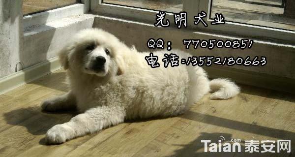 大白熊 (25).jpg