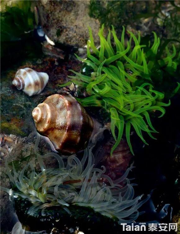 海螺.jpg