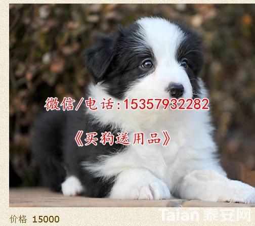 7dd98d1001e939011a7ff98d7bec54e736d19607.jpg