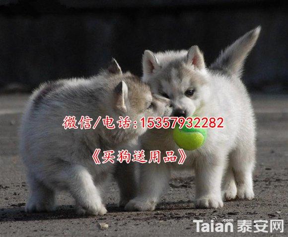 middle_800x658-192423_v2_14301439637863775_dd0035965686fd92cf32d0b77bfb1ba7.jpg