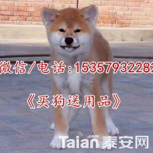 T1KH5yXdNVXXa5RLo9_103317_jpg_310x310.jpg