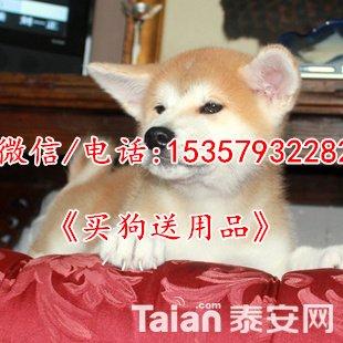 T2_MejXaBaXXXXXXXX_!!817666976.jpg_310x310.jpg