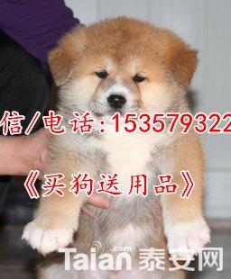 T2iBGEXitaXXXXXXXX_!!675835871_png_310x310.jpg
