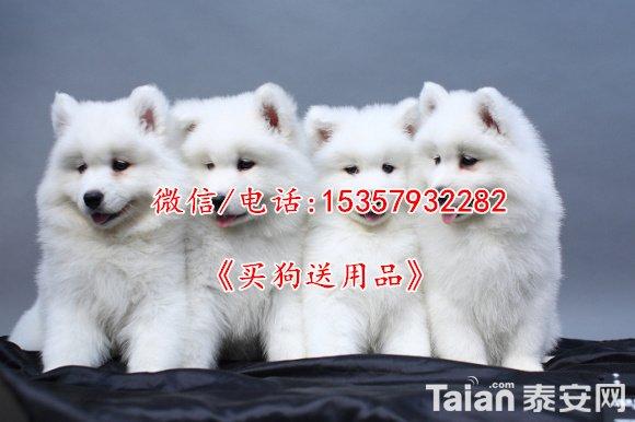 1-1101111310010-L.jpg