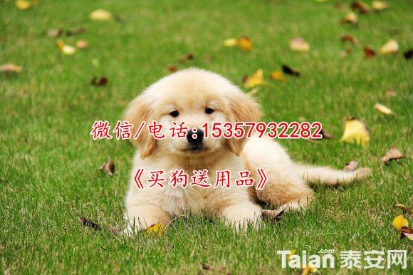30434031_2014_04_11_16_42_48_c4cce.jpg