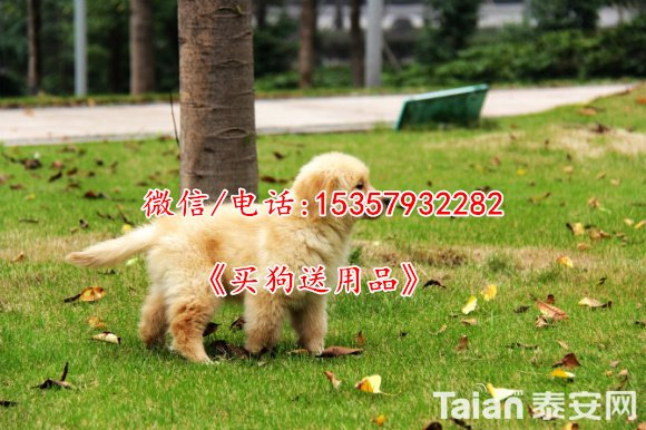 30434031_2014_04_11_16_42_49_6a4b2.jpg
