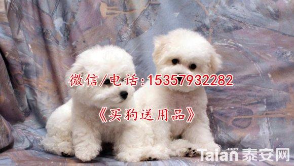 1-140524135053926.jpg
