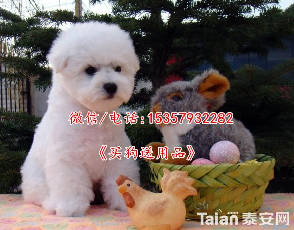 1-1405241355005c.jpg