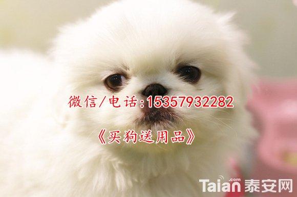 1301008410.jpg