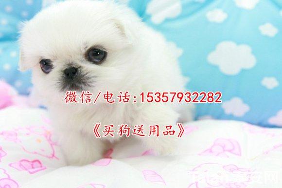 1301377122.jpg