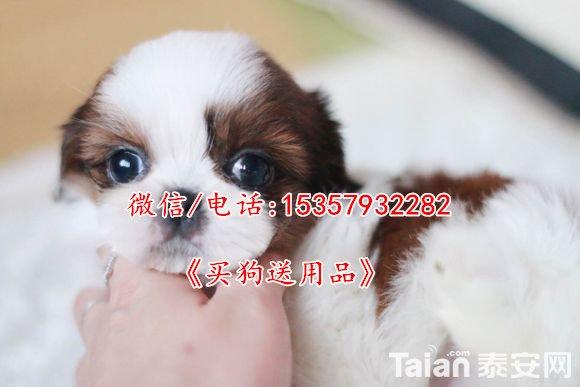 024f78f0f736afc37e09ec71b819ebc4b7451298.jpg