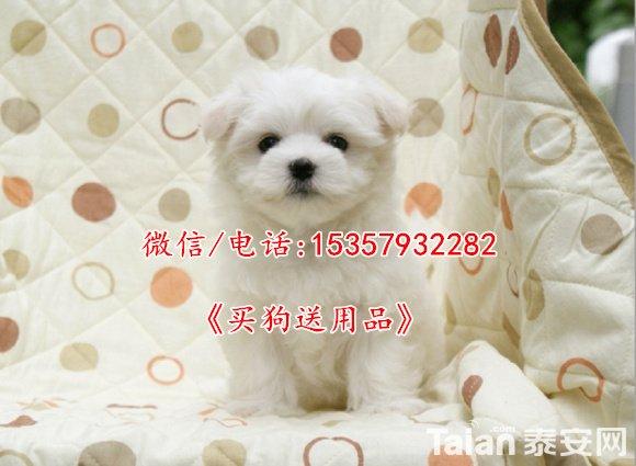 T27AKqXmVaXXXXXXXX_!!325971603.jpg