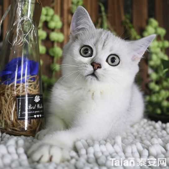 QQ图片20190104201824_gaitubao_com_jpg.jpg
