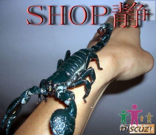 世界上最大的蝎子-----非洲帝王蝎