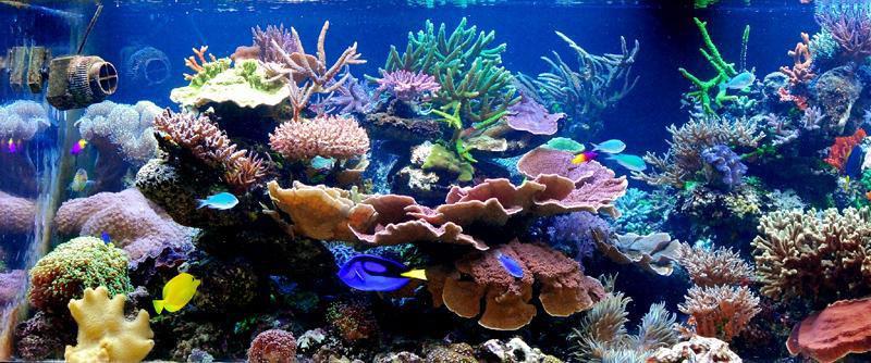壁纸 海底 海底世界 海洋馆 水族馆 800_334