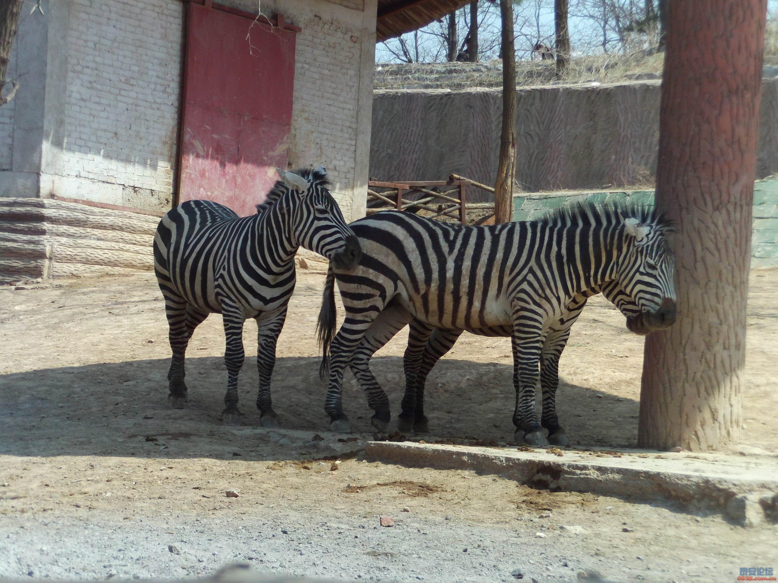 济南跑马岭野生动物园