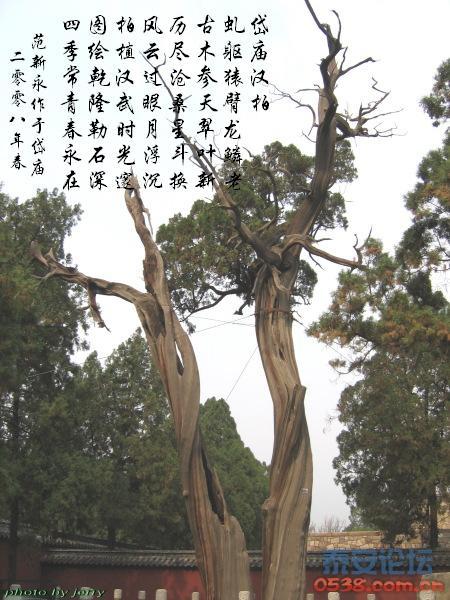 参天大树手绘图