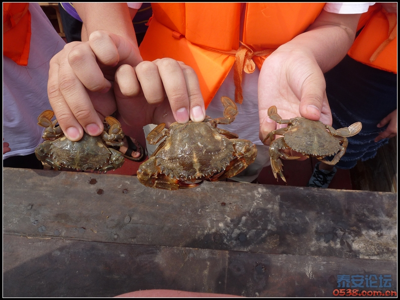 推荐暑假带孩子来长岛吃海鲜~洗海澡~坐快艇感受海岛生活